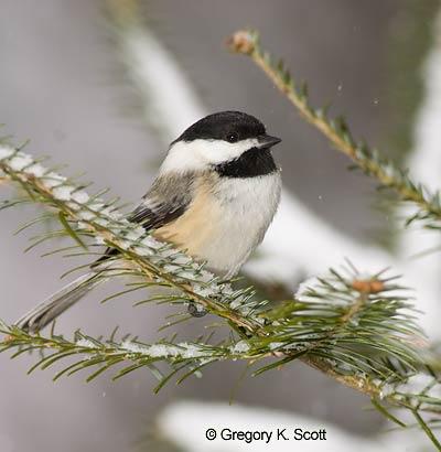 Bird Identifiction Quiz